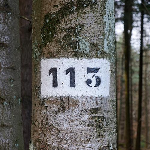 Chiffre 113 Forêt