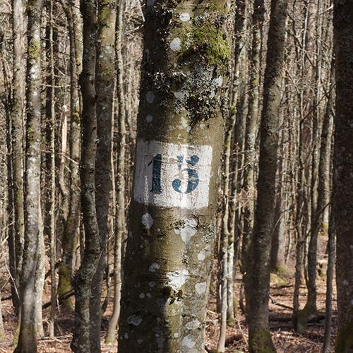 Chiffre 15 Forêt