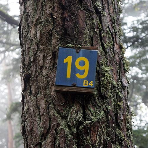 Chiffre 19 Forêt
