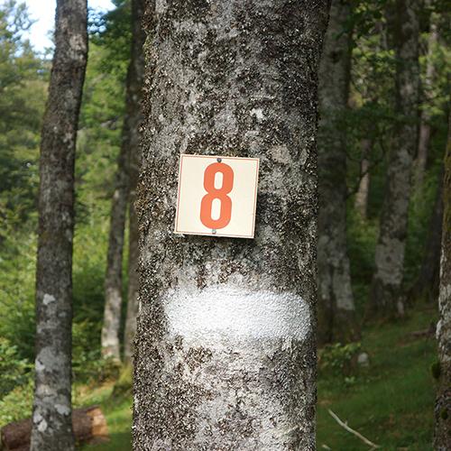 Chiffre 8 Forêt