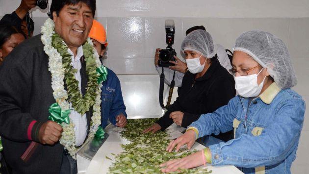 yerba mate de coca en bolivia