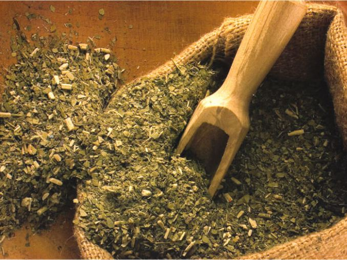 paises productores de yerba mate
