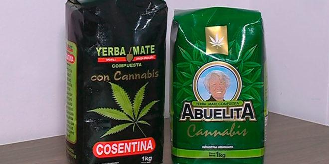 Uruguay comenzará la comercialización de yerba con cannabis