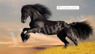 Black Horse – Car, Motorbike, and Caravan Finance Services