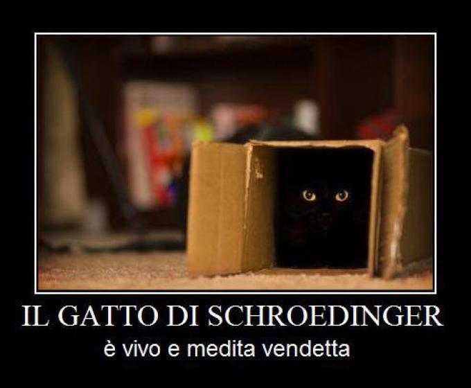 Risultati immagini per gatto di schroedinger