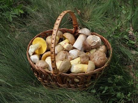 Conservare i funghi porcini