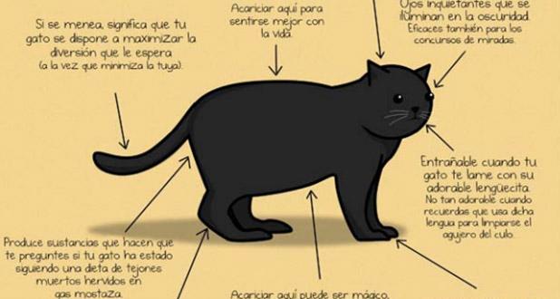 gato-astiberri