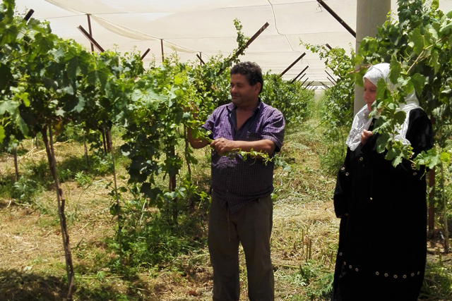 Supporting efficient irrigation systems in the West Bank