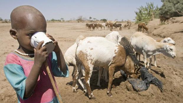 El papel de la leche y los productos lácteos en la nutrición humana forma parte del trabajo de la FAO en Cooperación Internacional