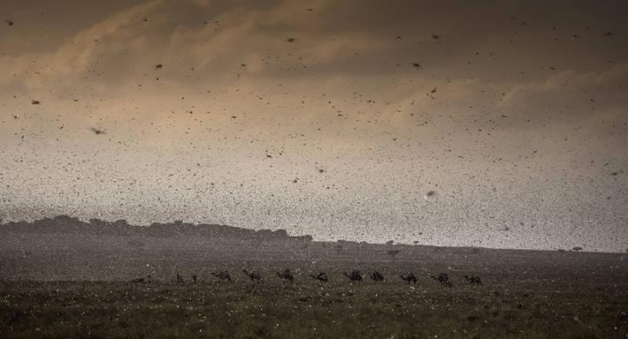 Photo: ©FAO/Petterik Wiggers/FAO