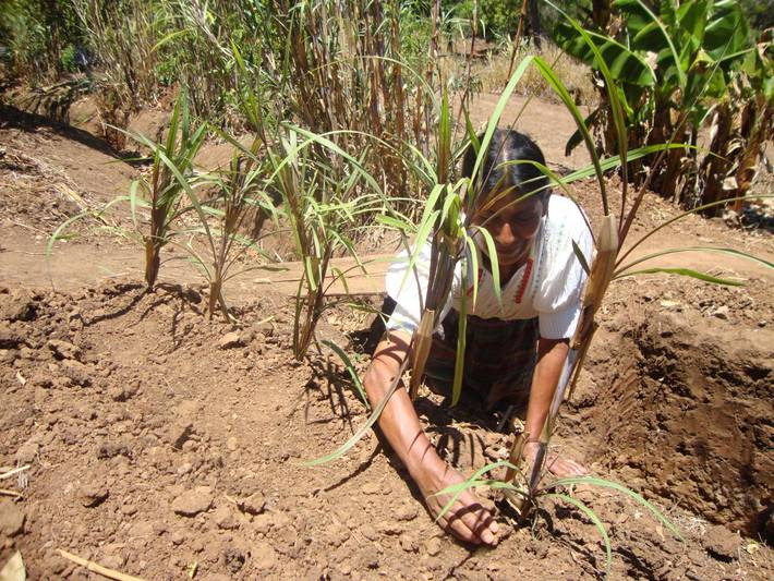 Photo: ©FAO/FAO Guatemala country Team / FAO