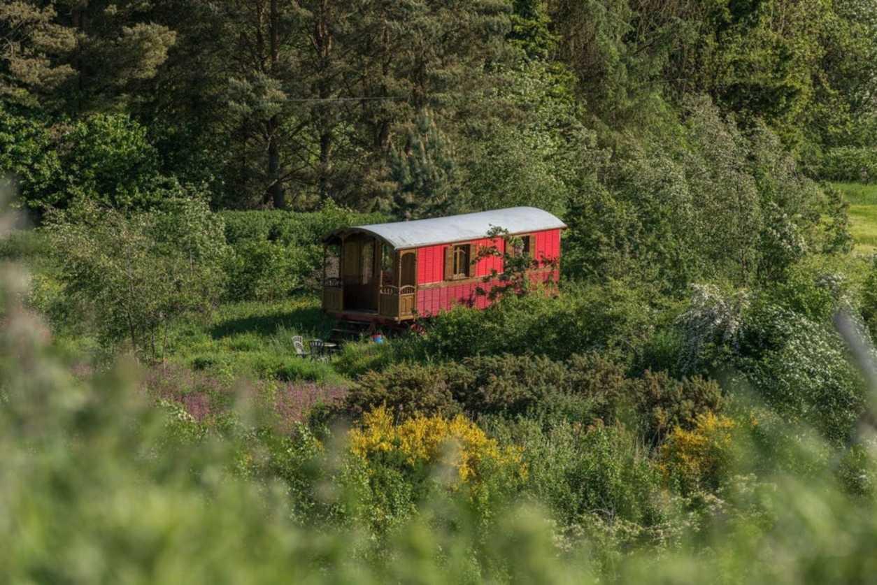 red-gypsy-caravan-in-a-field-russian-roulette-caravans-scottish-borders