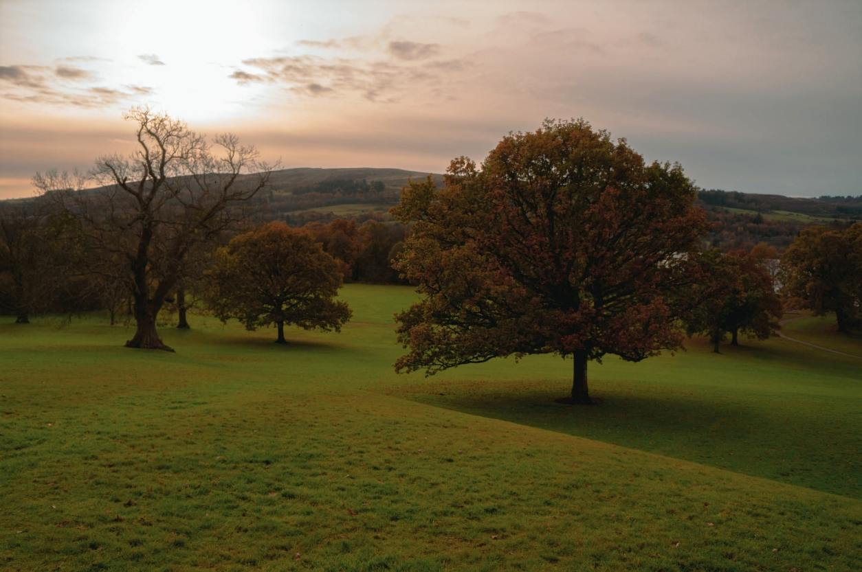 autumn-trees-on-a-green-hillside-at-sunset-at-balloch-country-park