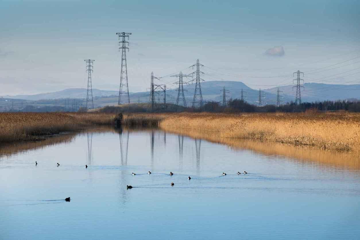 ducks-floating-down-newport-wetlands-at-sunset