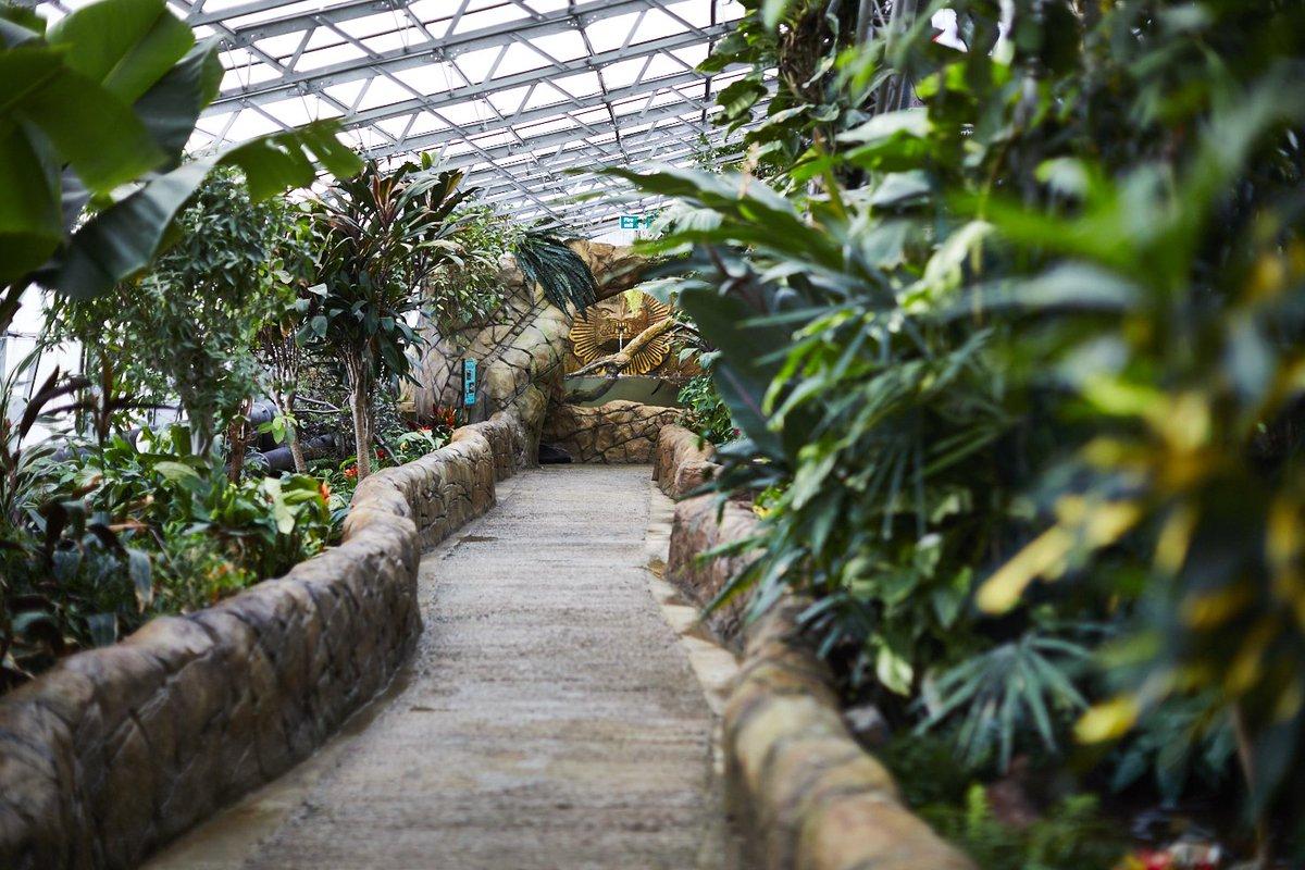 path-running-through-indoor-rainforest-at-tropical-world-leeds