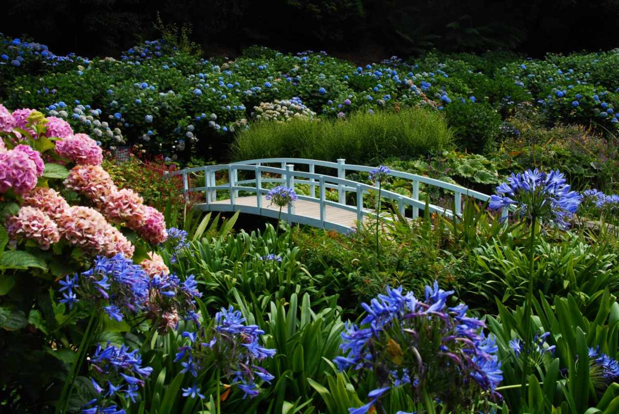 white-bridge-in-the-hydrangea-valley-of-trebah-garden-things-to-do-in-cornwall-in-winter