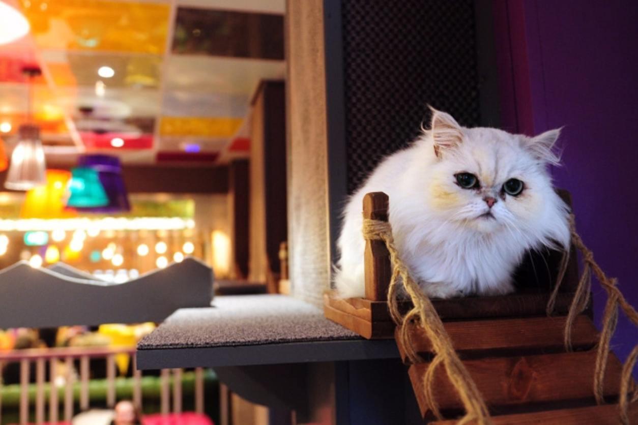 white-fluffy-cat-sat-inside-kitty-cafe-cat-cafe-date-ideas-leeds