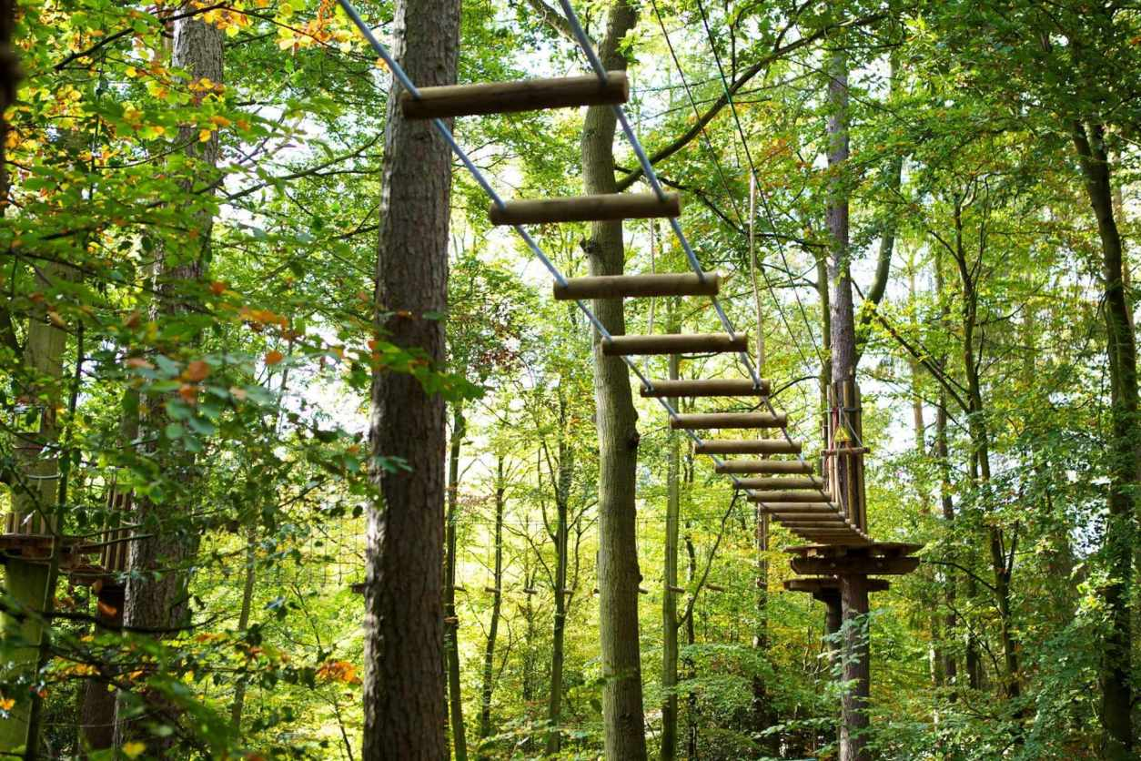 go-ape-at-beechenhurst-forest-of-dean-things-to-do-in-the-forest-of-dean