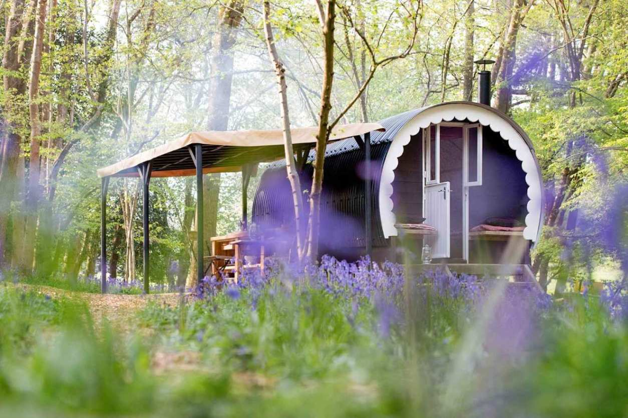 walk-wood-cabin-in-woodland-with-bluebells-glamping-sussex