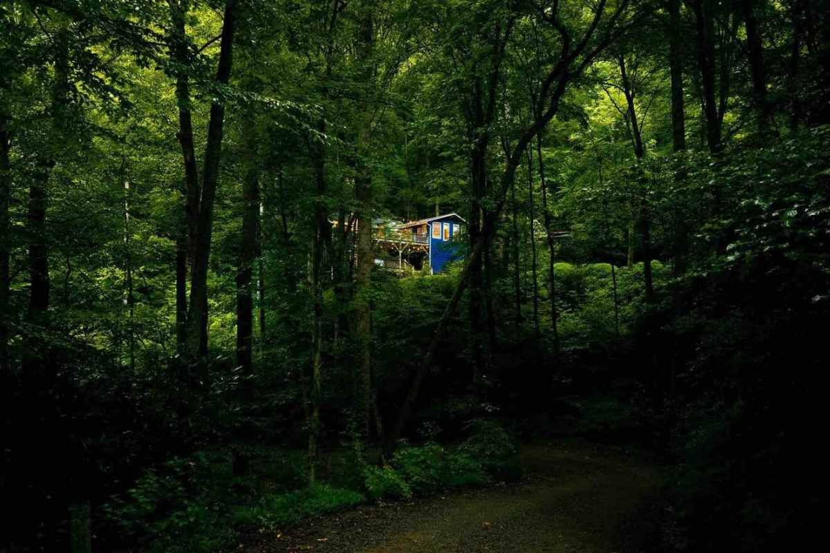 exterior-of-happy-place-treehouse-in-woodland