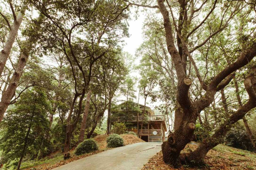 road-leading-up-to-bees-nees-treehouse-in-woodland