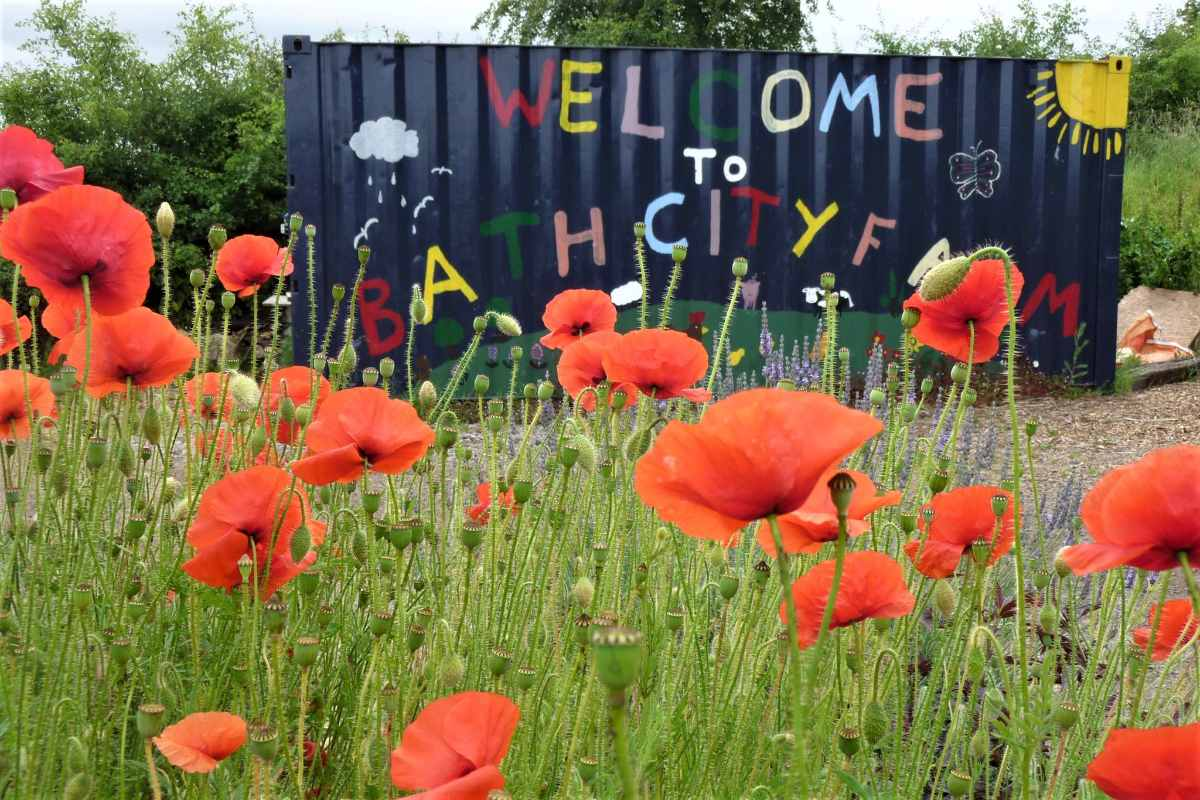 poppies-in-front-of-bath-city-farm-sign