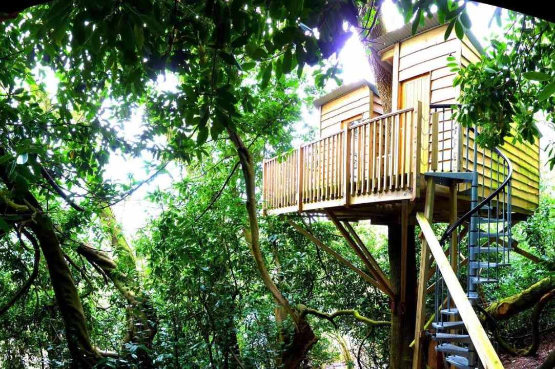the-nest-treehouse-surrounded-by-trees