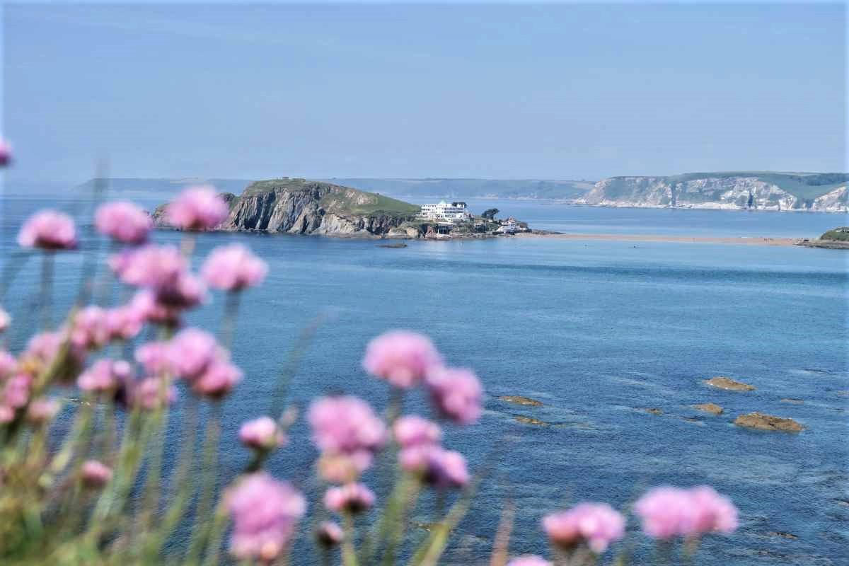 purple-flowers-in-foreground-with-burgh-island-behind