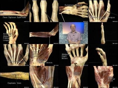 كورس التشريح البشرى بالفيديو | Acland's DVD Atlas of Human Anatomy