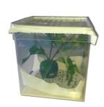 Box per allevamento bruchi