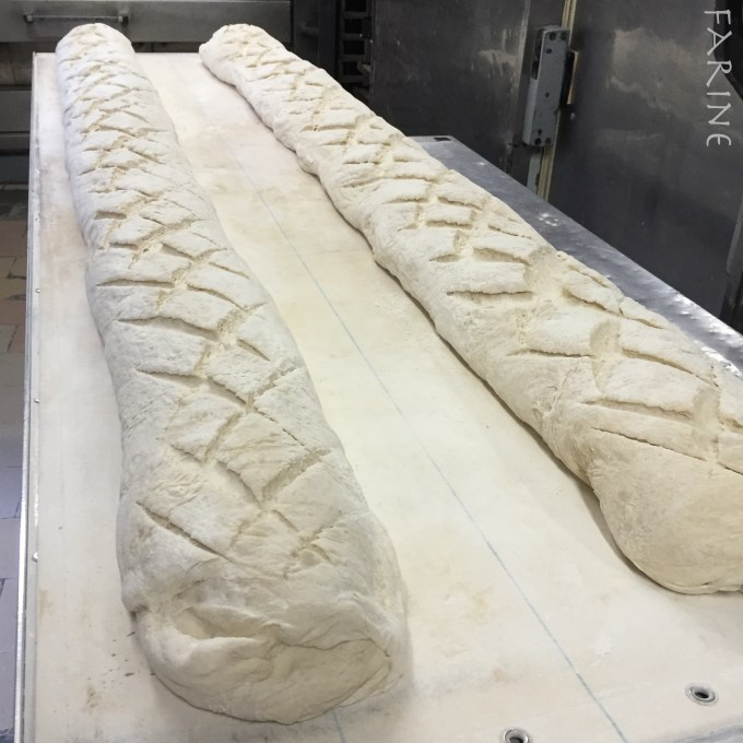 Conger bread proofing