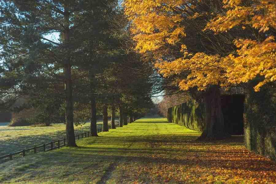 Avenue of trees Farleigh Wallop