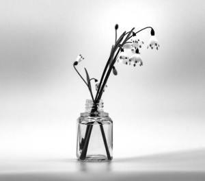 Flores a Remojo
