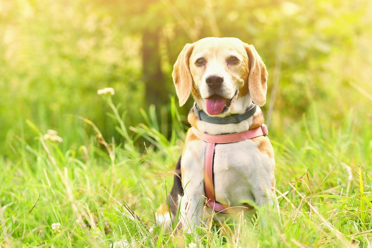 Animali d'affezione, col caldo anche la loro salute è a rischio