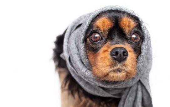 L'estate e l'otite nei cani: come evitarla?