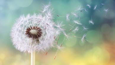 alergia al polen rinitis alergica