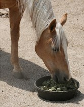 Winter Tips for Taking Care of Your Horse
