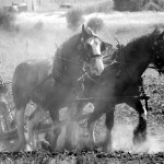"""A Bygone Era."" Image by Lyn Allen. 2012 Winner - 'Working the Land' - Open Category"