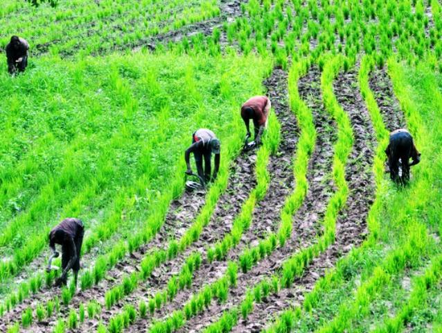 Nigeria adopts new agriculture policy