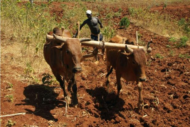 More organic farming in sub-Saharan Africa