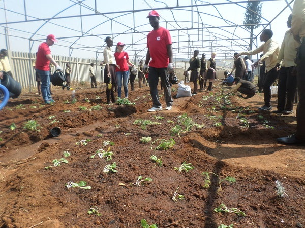 Cummins and Food & Trees for Africa partner in food-garden initiative.