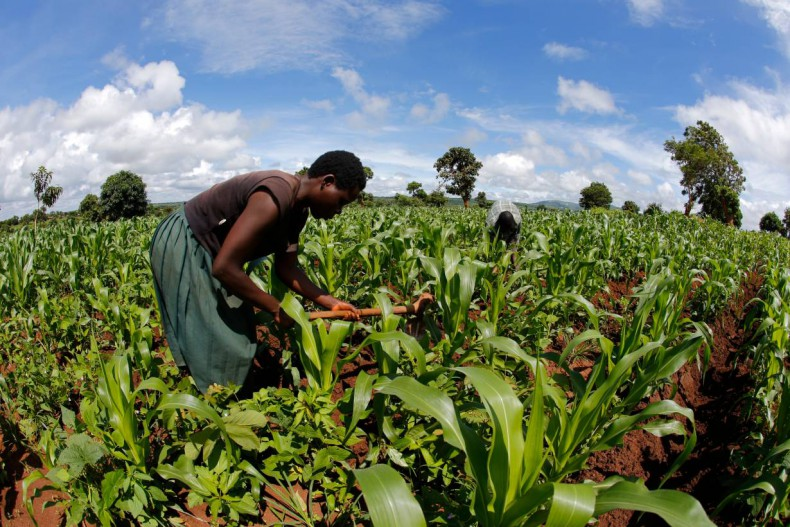 Kenya: Sh26 Billion to Cushion Agriculture