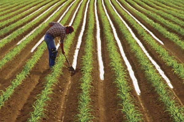 Agriculture is a shining light in a declining economy