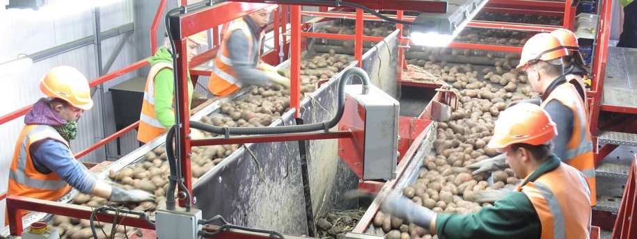 New Zealand grower processes loads more onions!