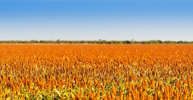 Africa must start by treating agriculture as a business