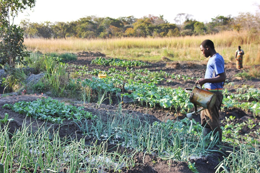 Dry-Season Vegetable Production Pays Dividends!
