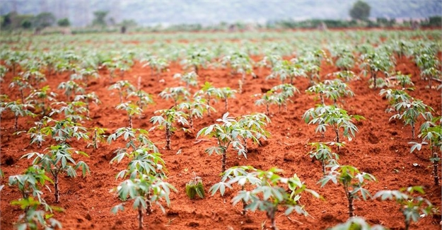 African solutions urgently sought for agricultural revolution