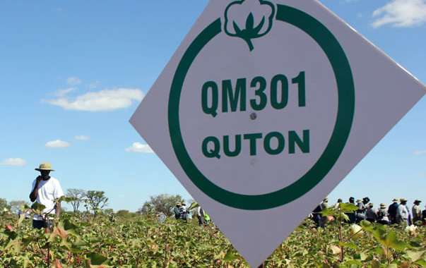 Quton releases new cotton hybrid seed
