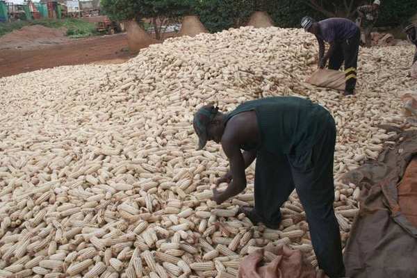 Farmers count US $1.5Bn loss in wasted food