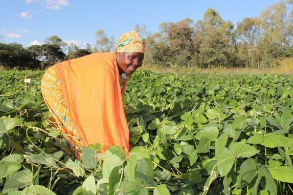 SIMLESA's conservation agriculture project to increase yields and farmers' income